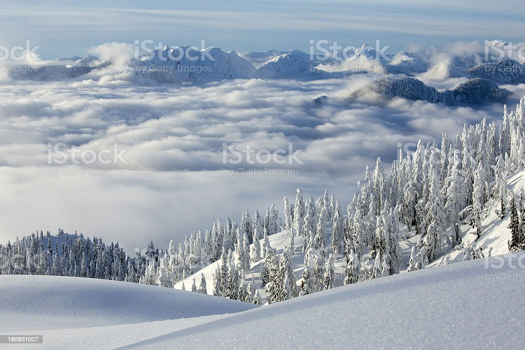 Snow covered Trees on Mt. Seymour royalty-free stock photo