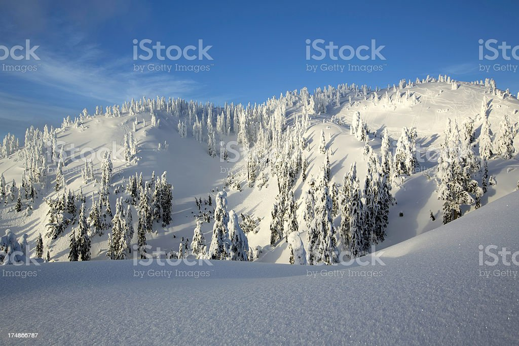 Snow covered Trees on Mt. Seymour stock photo
