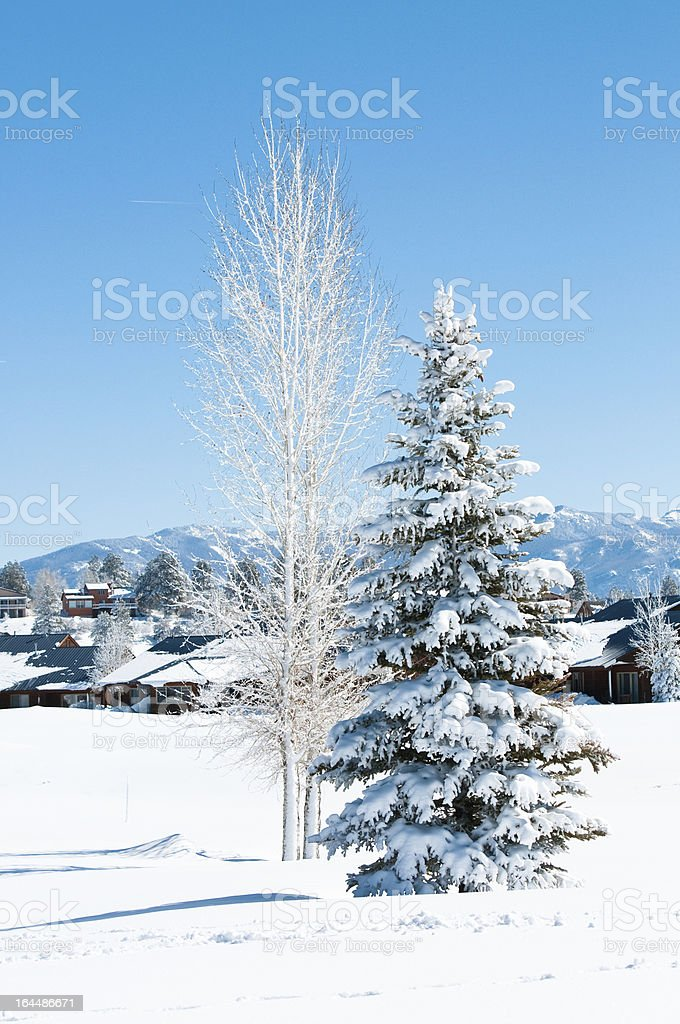Snow covered trees royalty-free stock photo