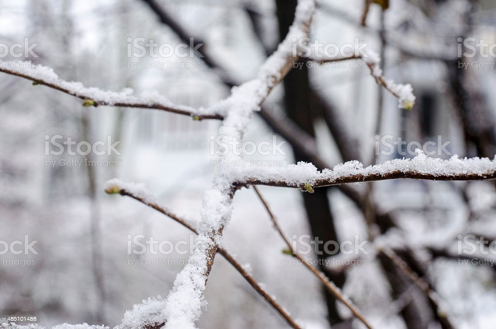 Snow Covered Winter Trees stock photo