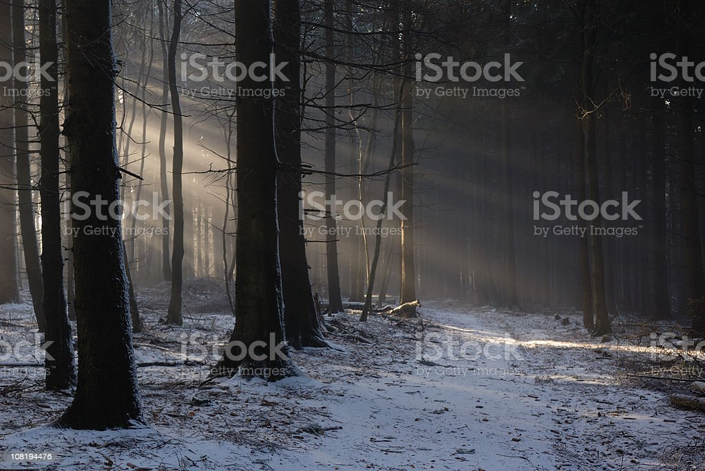 Snow Covering Ground in Dark Forest stock photo