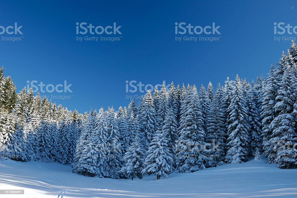Snow Cowered Winter Landscape royalty-free stock photo