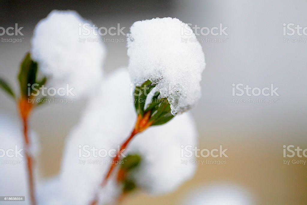 Snow creates tiny balls of ice on plant stem stock photo