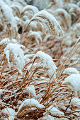 Snow crystals on dry grass