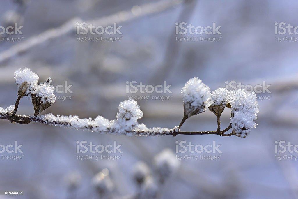 snow crystals royalty-free stock photo