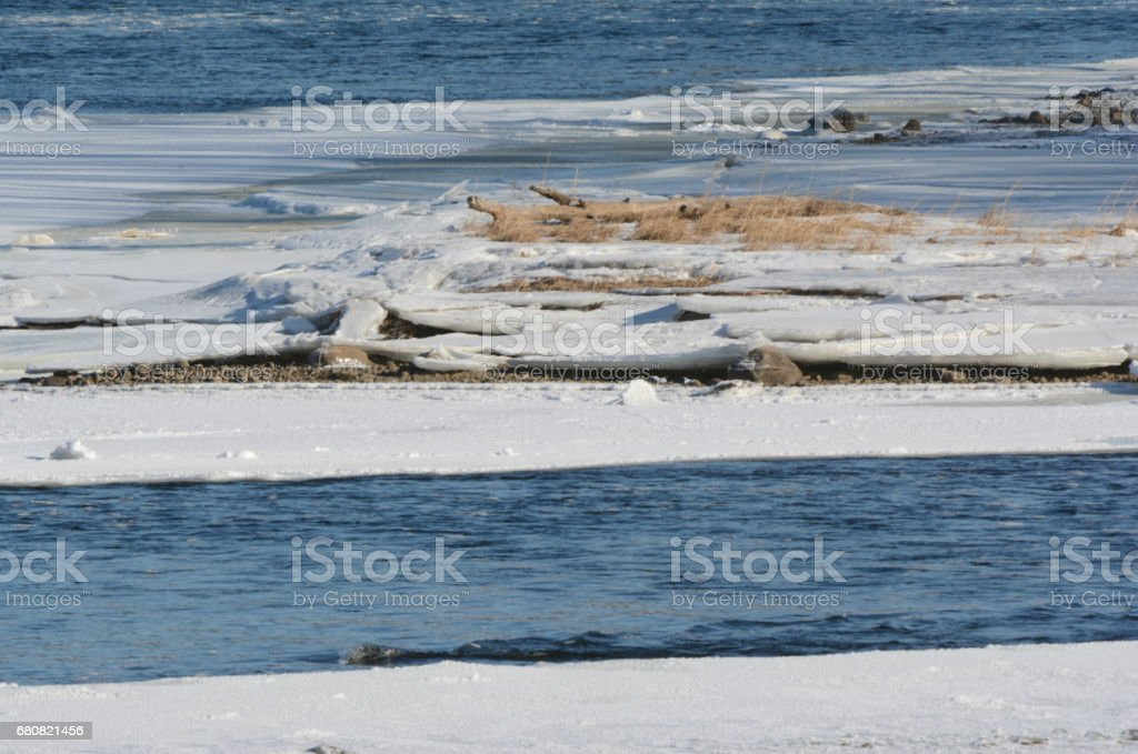 Snow, Driftwood and River Ice stock photo