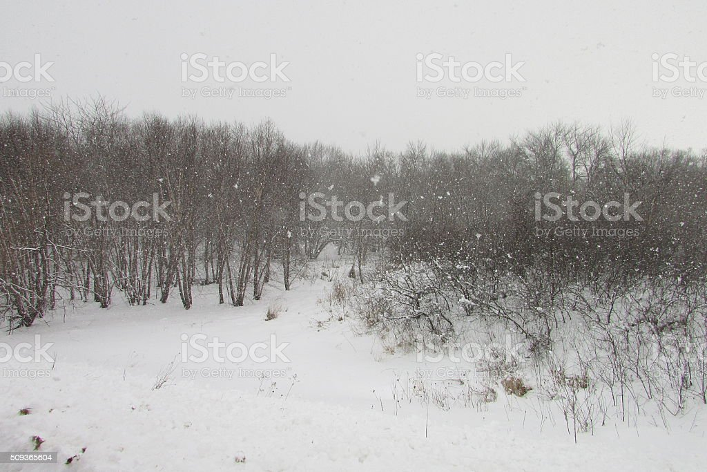 Snow Fall in the Forest stock photo