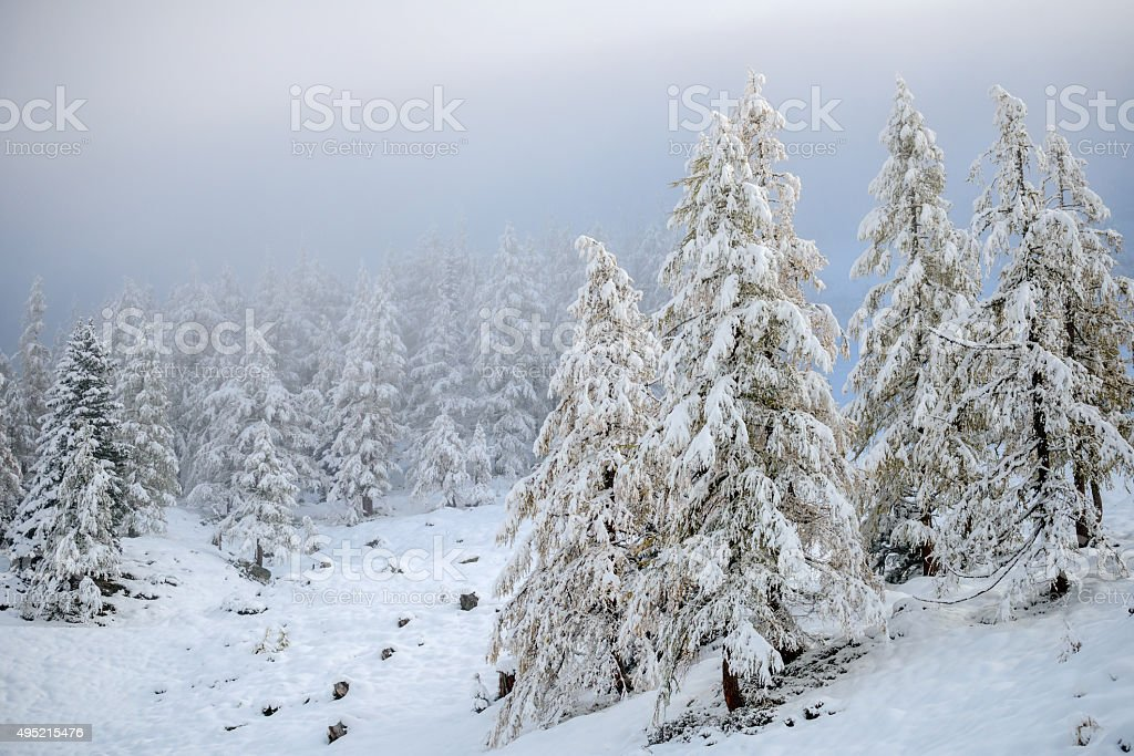 Snow Fall on Tree stock photo