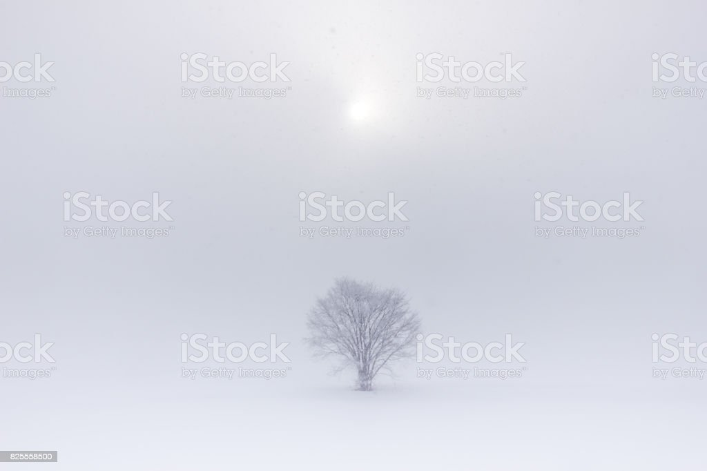 Snow falling in Biei stock photo