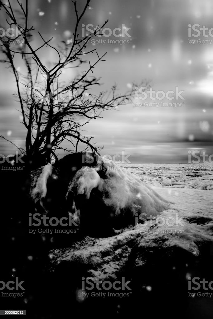 Snow Falling in Point Pelee National Park - Canada stock photo