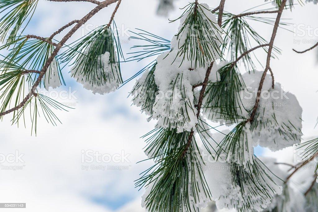 Śnieg spada na oddziale. zbiór zdjęć royalty-free