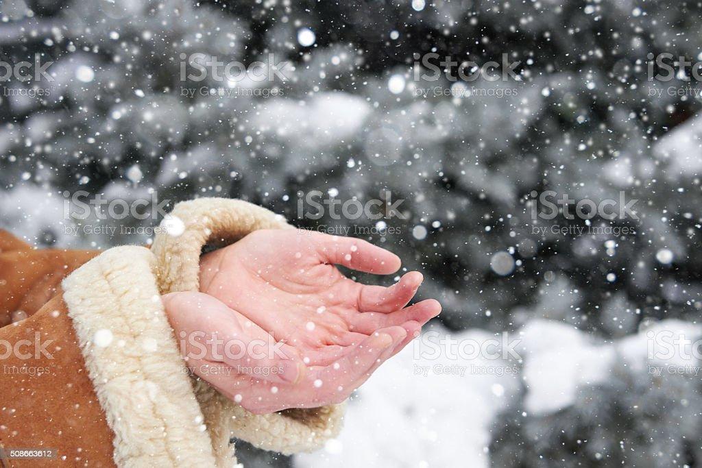 Snow falls on women's hands, winter season stock photo