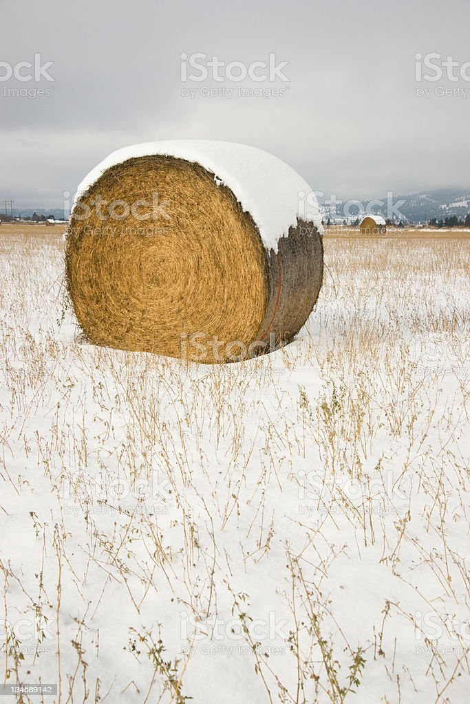 Snow Field Hay Straw Bale Sits on Farm During Storm stock photo
