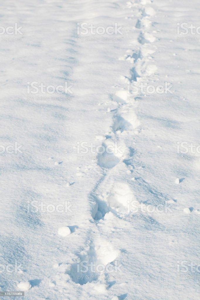 snow field royalty-free stock photo