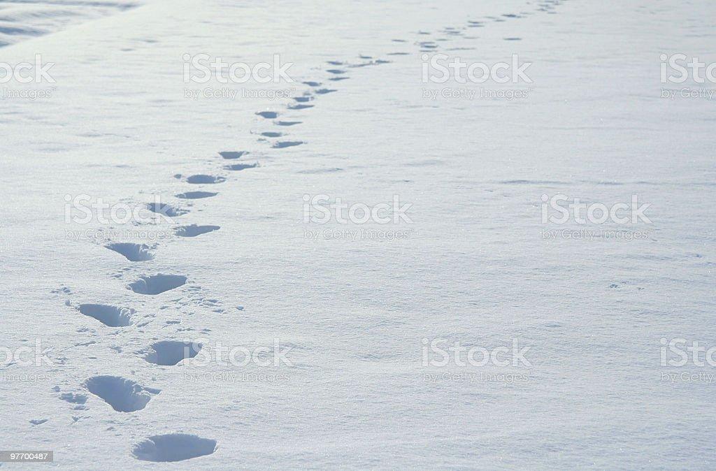 snow field stock photo