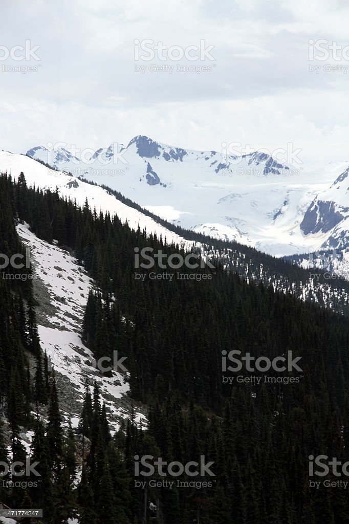 Snow Filled Forest royalty-free stock photo