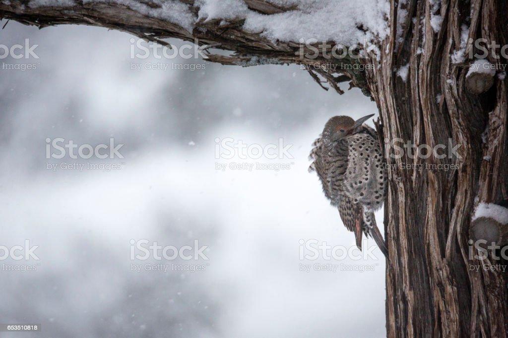 Snow Flicker stock photo