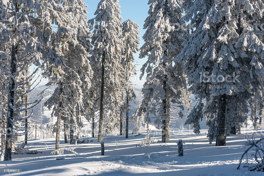 snow forest stock photo
