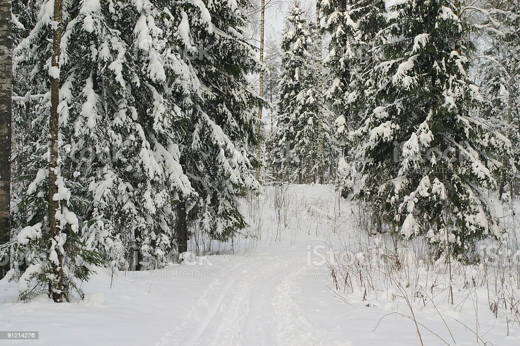 Snow forest royalty-free stock photo