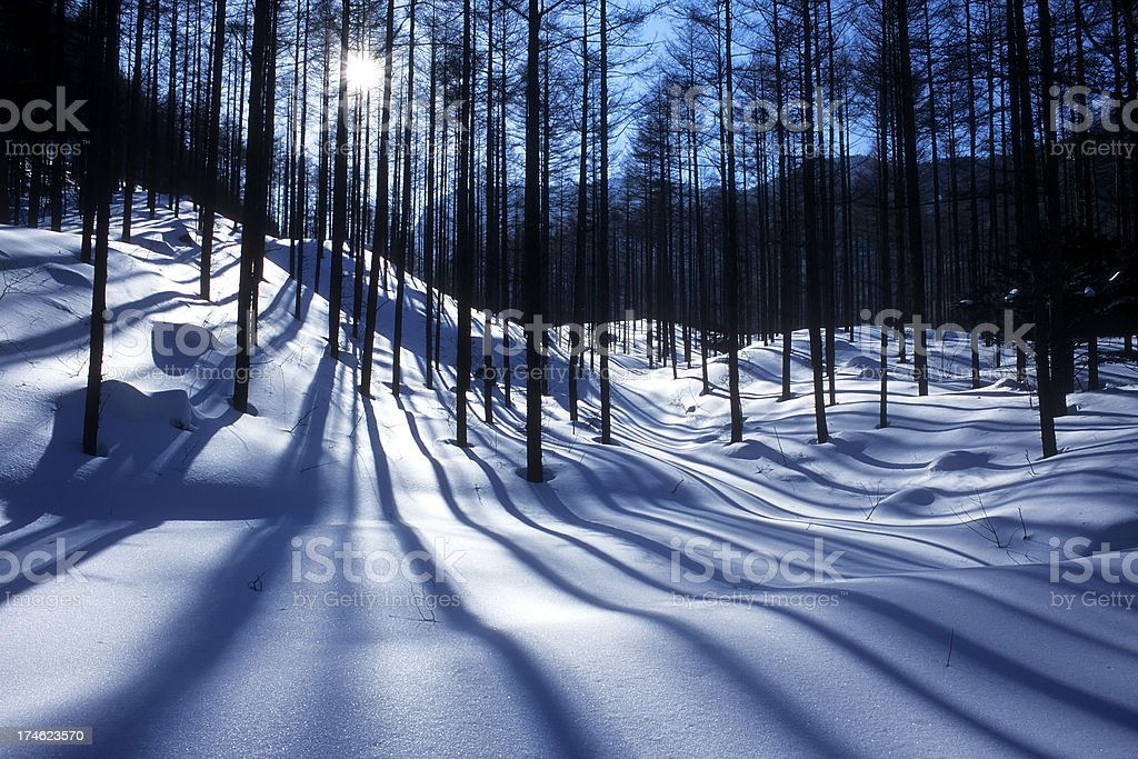 snow forests royalty-free stock photo