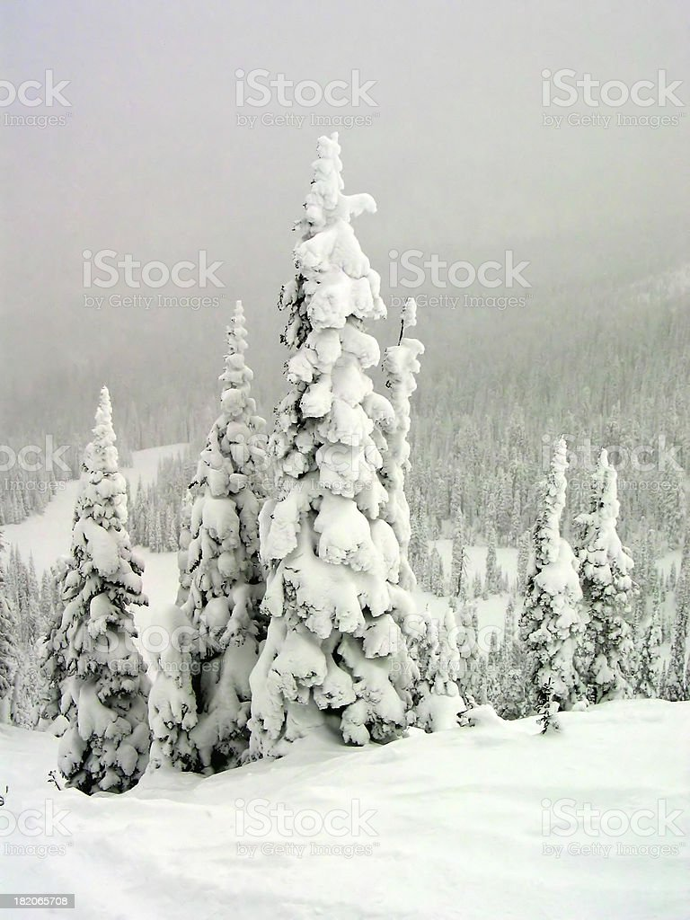 Snow Ghosts 2 royalty-free stock photo