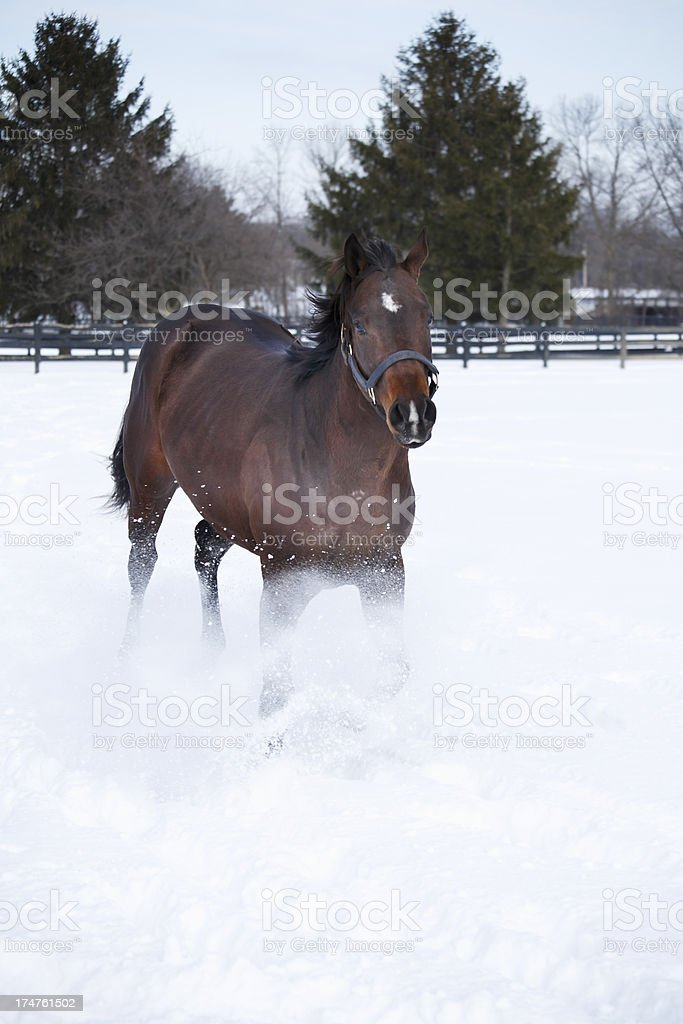 Snow goes flying from horse running. royalty-free stock photo