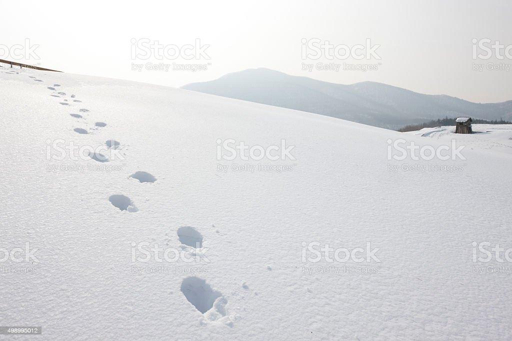 snow, hut, footprints stock photo
