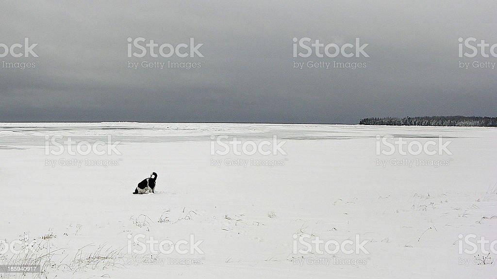 Snow Ice Winter Vista with Dog royalty-free stock photo