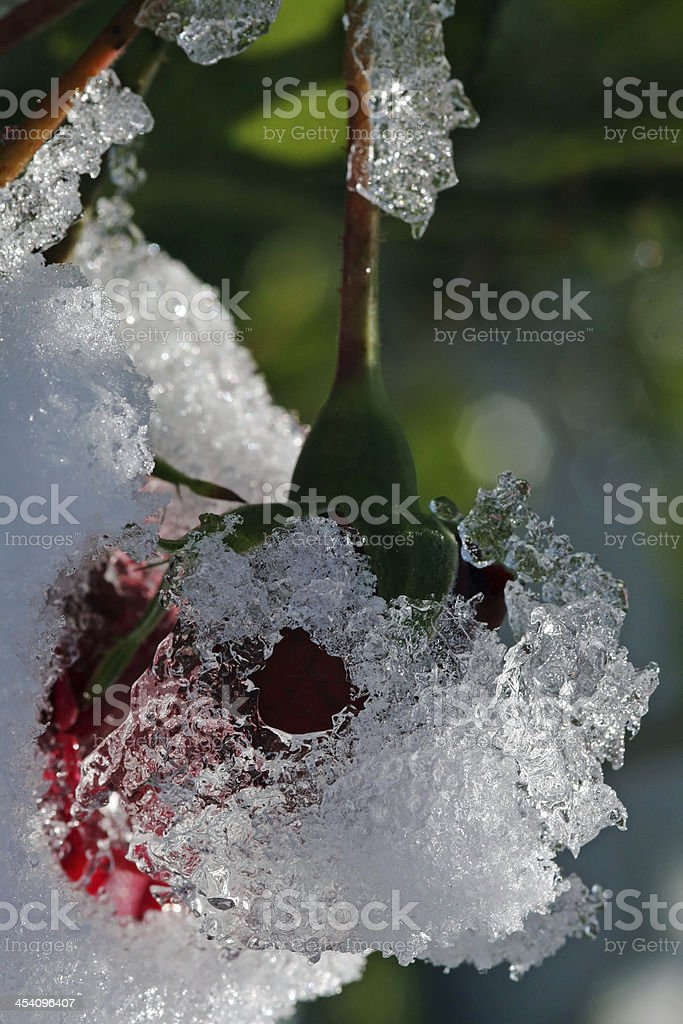 Snow in autumn stock photo