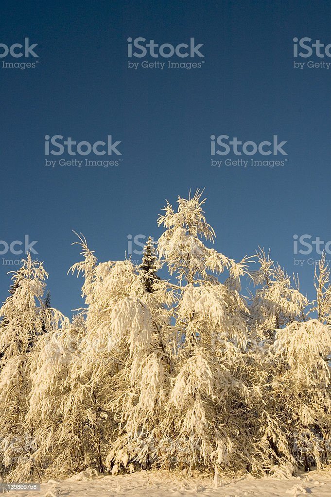 Snow in forest stock photo