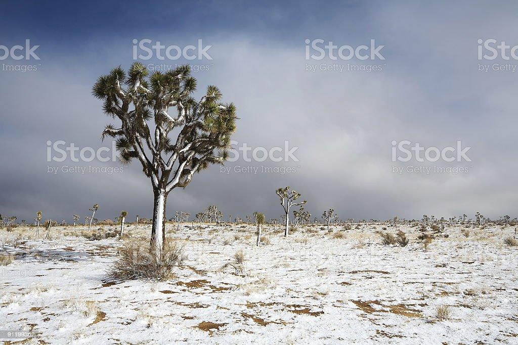 Snow in Mojave Desert stock photo