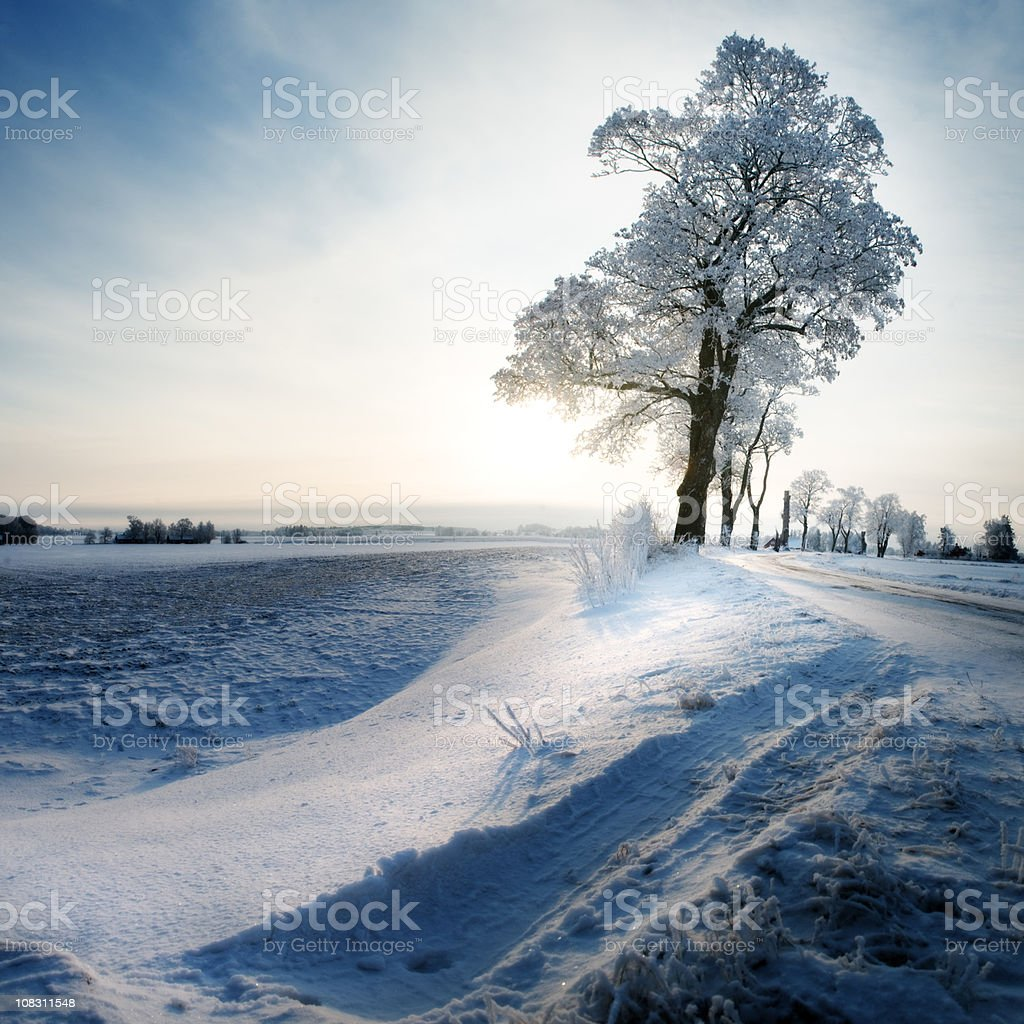 Snow in Sweden royalty-free stock photo
