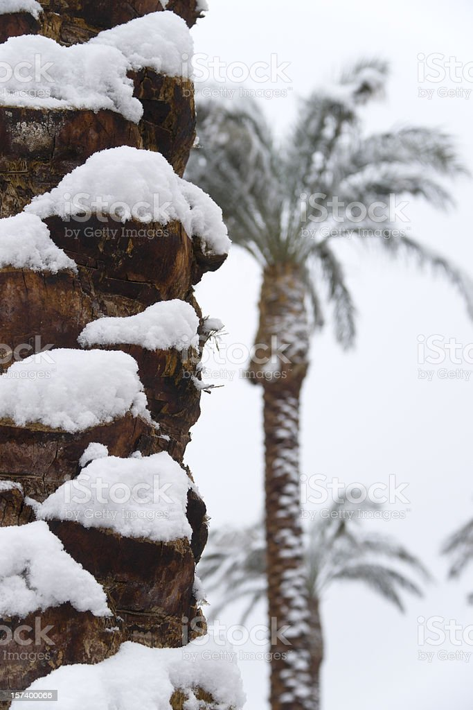Snow in the Desert royalty-free stock photo