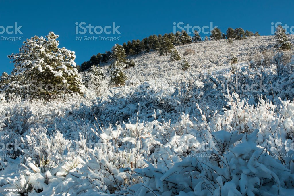 Snow in the Pike National Forest stock photo