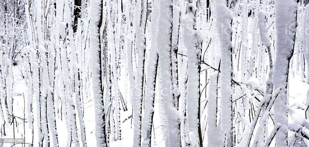 Snow in the winter forest after snowfall stock photo