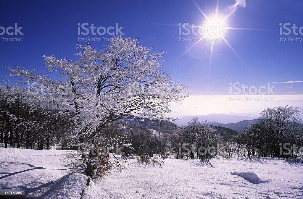 Snow landscape royalty-free stock photo