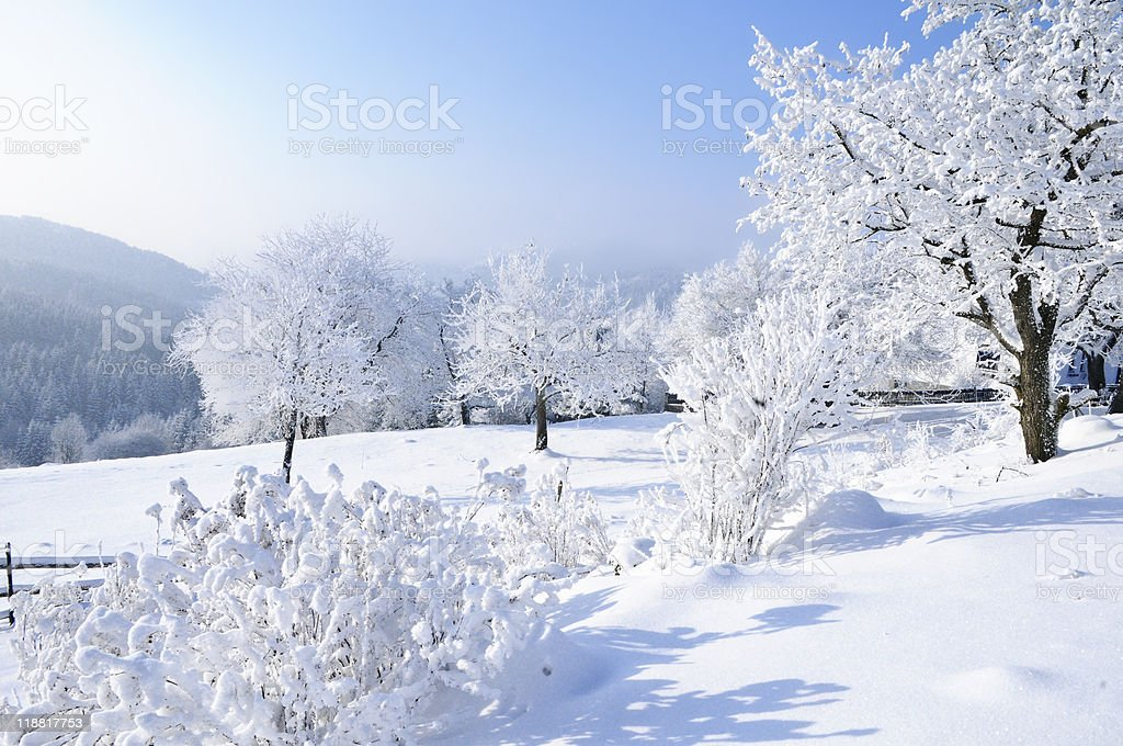 Snow Landscape with Trees royalty-free stock photo