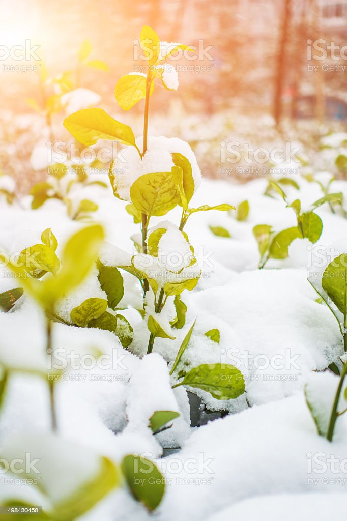 Snow melt stock photo