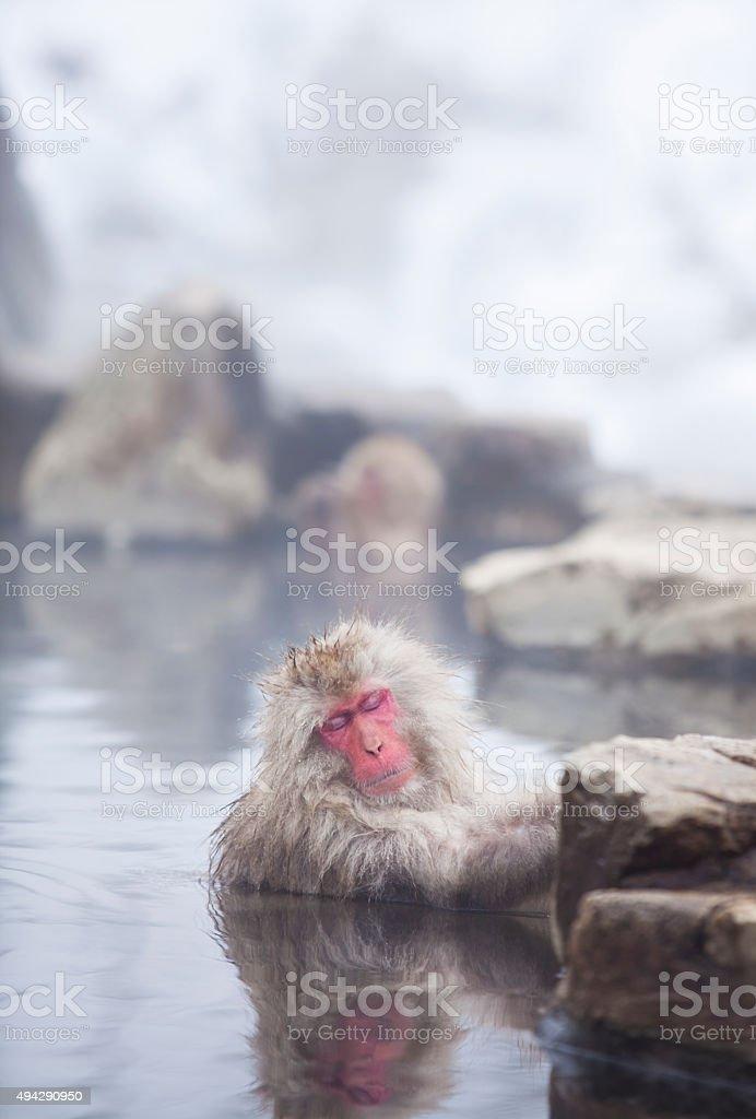 Snow monkeys in hot springs of Nagano,Japan. stock photo