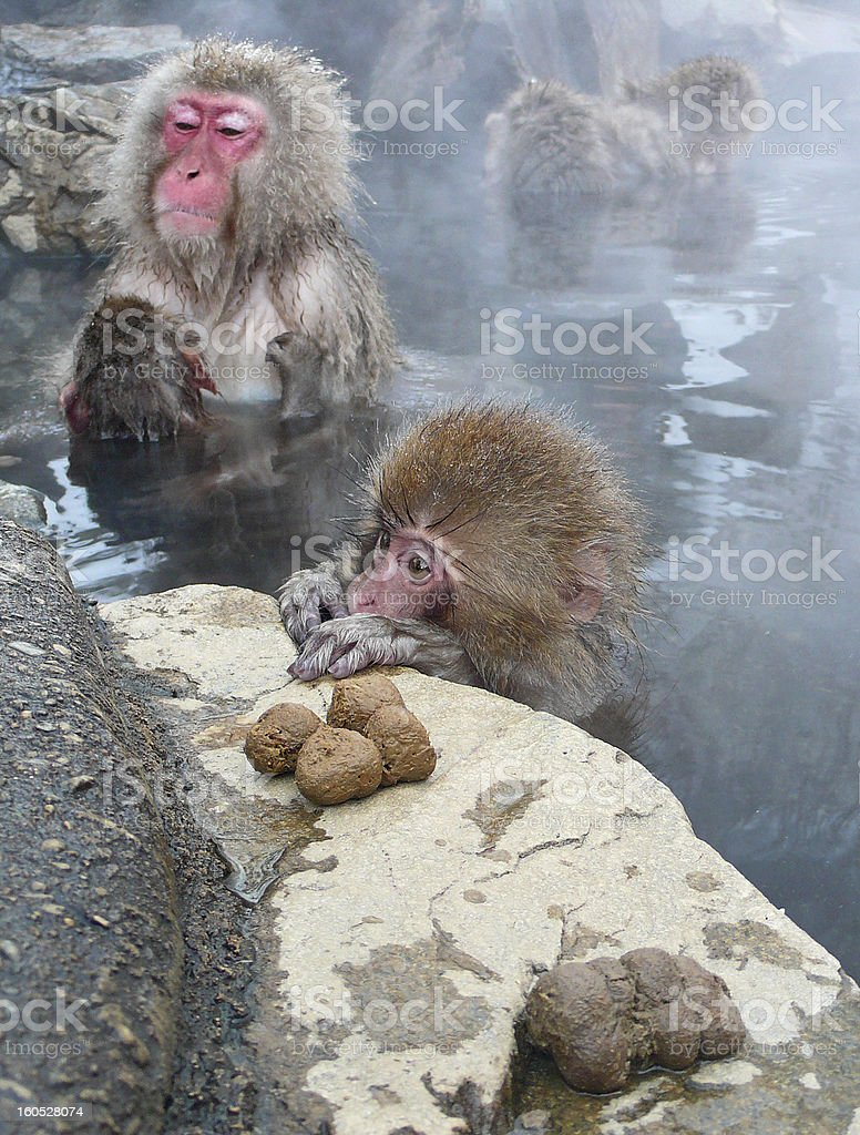 Snow monkeys in hot springs royalty-free stock photo
