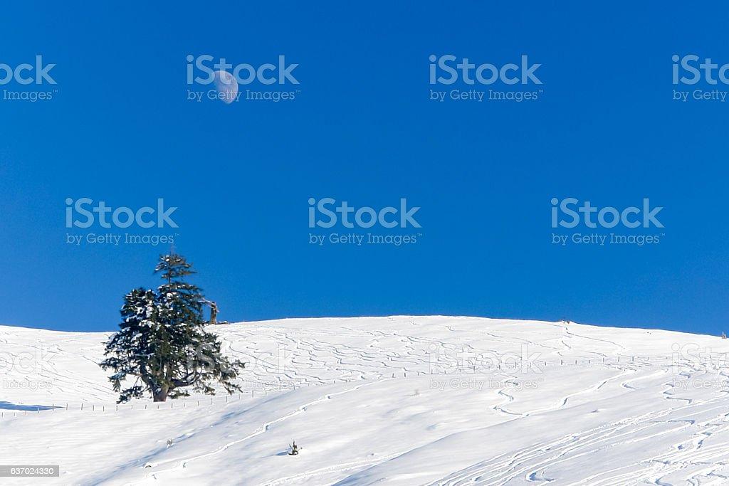 Snow, Moon and Tree II stock photo