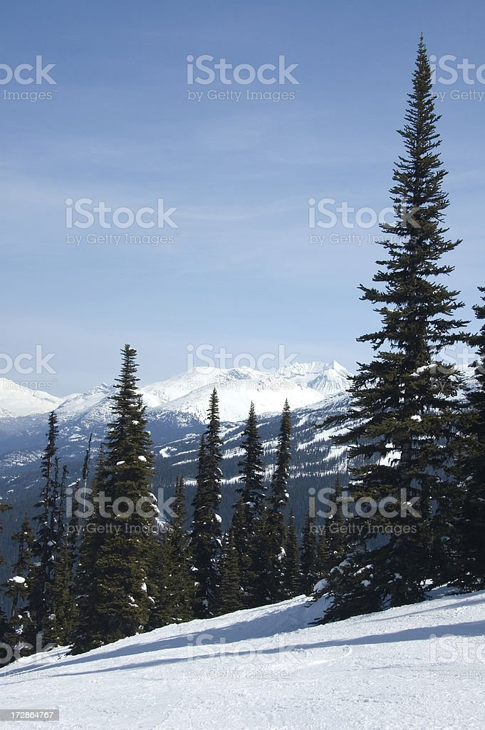 Snow Mountain and Pine Tree royalty-free stock photo