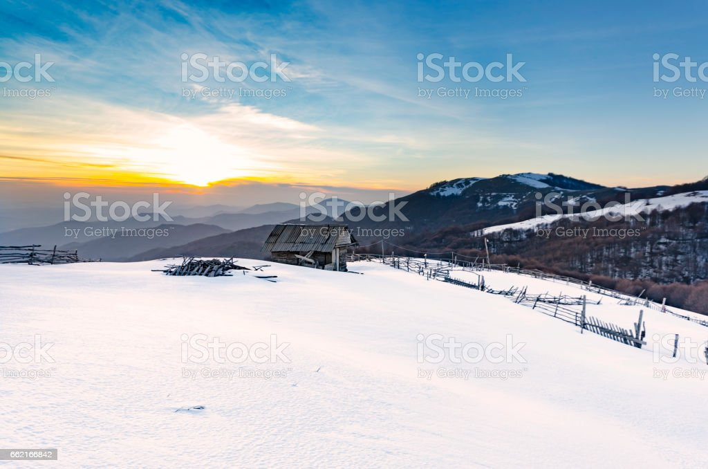 snow mountain, snow covered tree lit yellow light of the morning sun stock photo