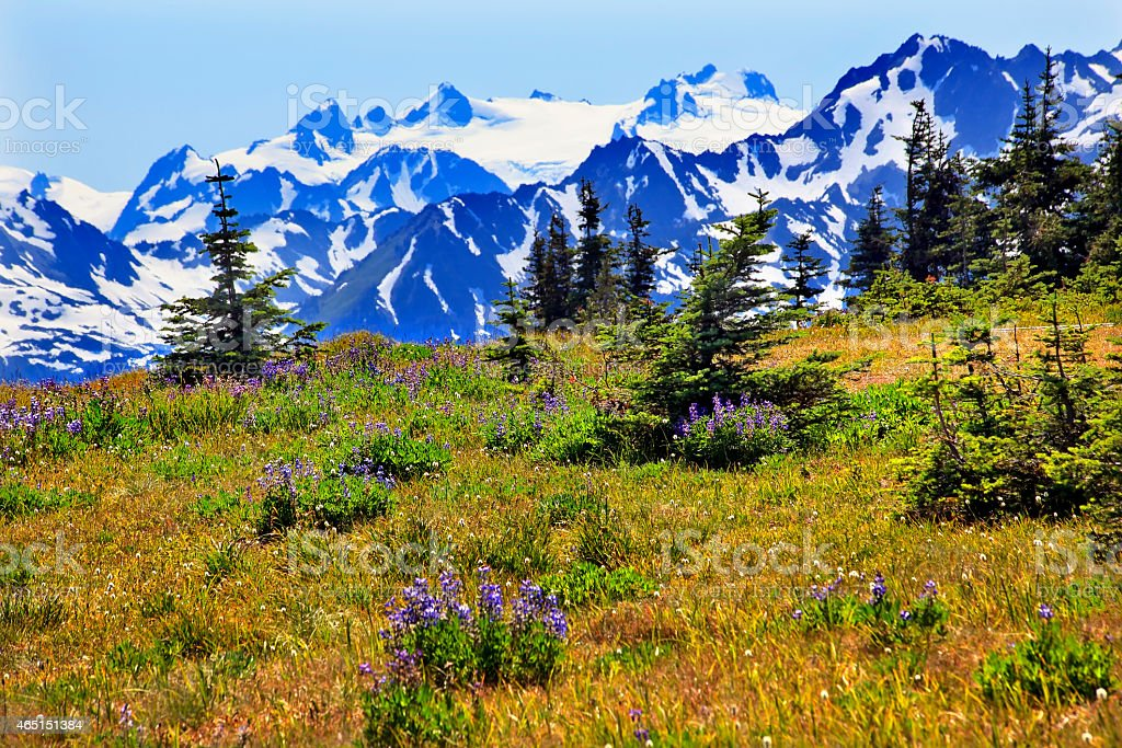 Snow Mountains Hurricane Ridge Olympic National Park Washington stock photo