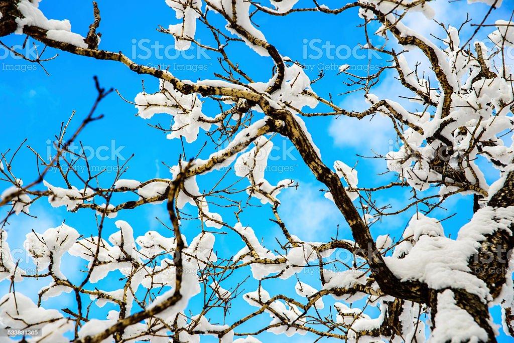 Śnieg na oddziale zbiór zdjęć royalty-free
