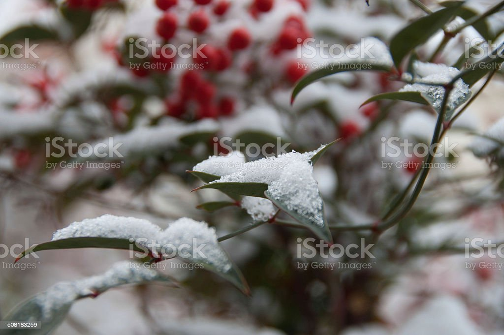 snow on leafes royalty-free stock photo
