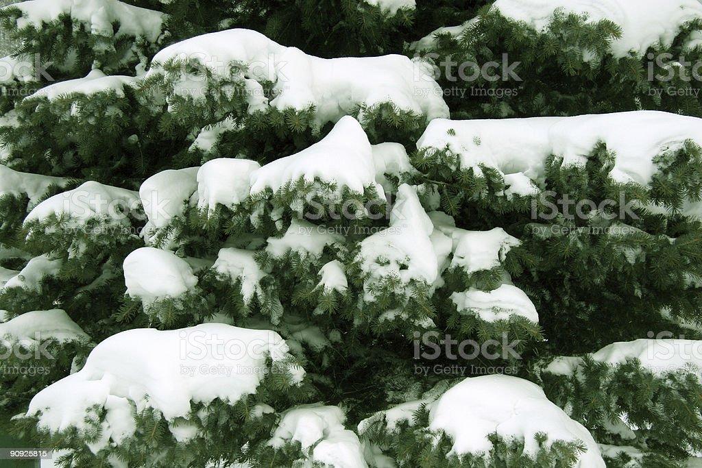 Snow On Pine Texture stock photo