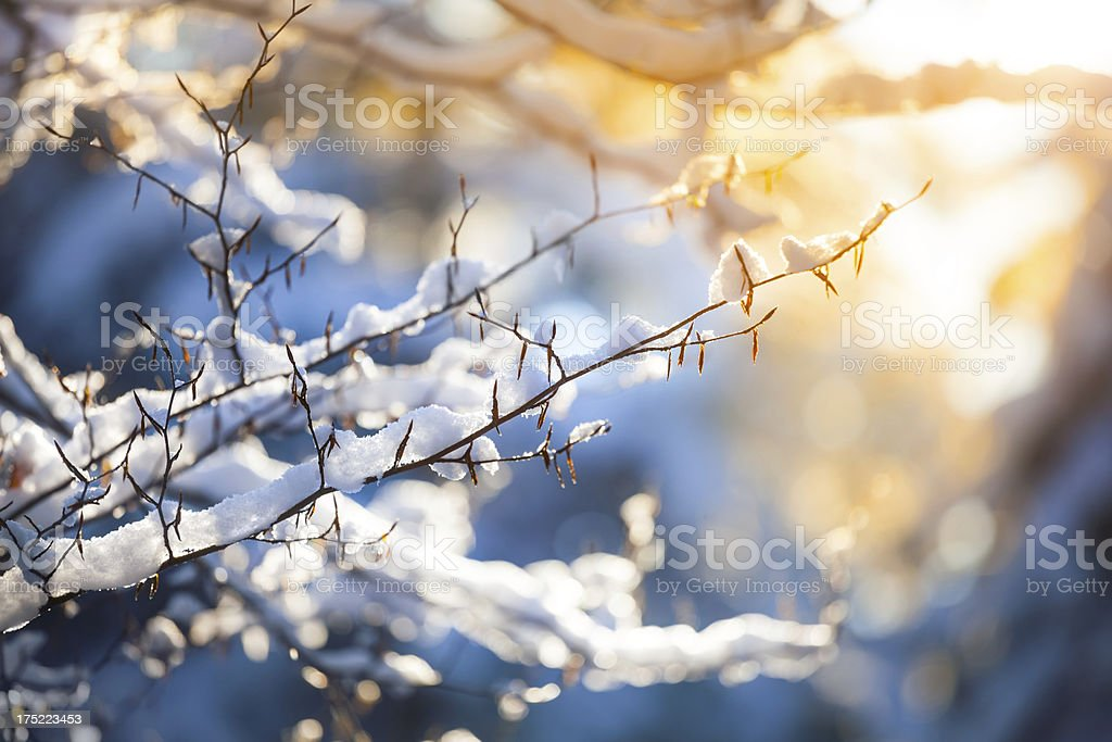 Snow on the Branch and Sunset - Winter Background stock photo