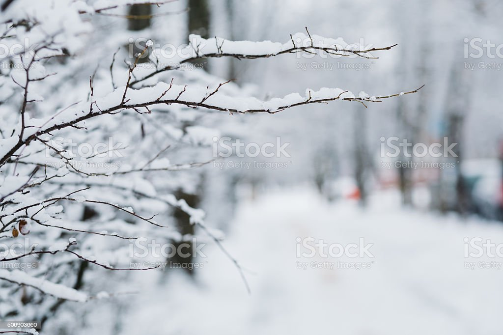 Snow on the branches in winter stock photo
