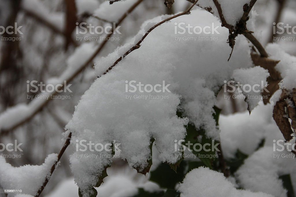 Snow on the branches. stock photo